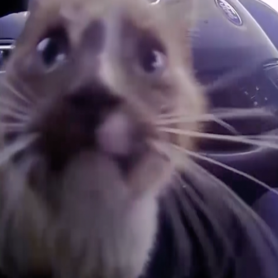 Watch: Missouri police officer rescues kitten found on busy highway