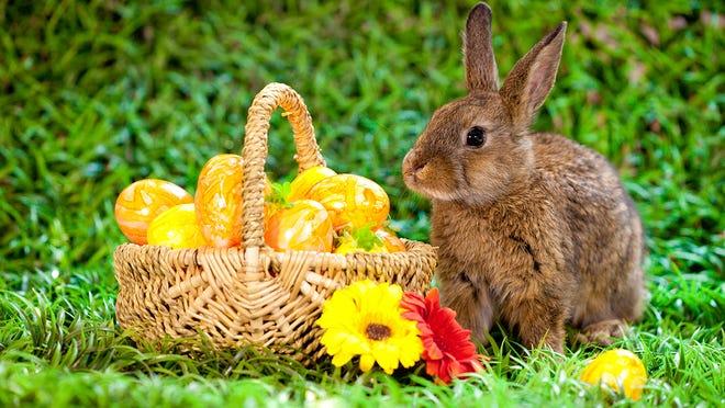 Easter 2020 How The Holiday Egg Hunts Will Change Amid Coronavirus