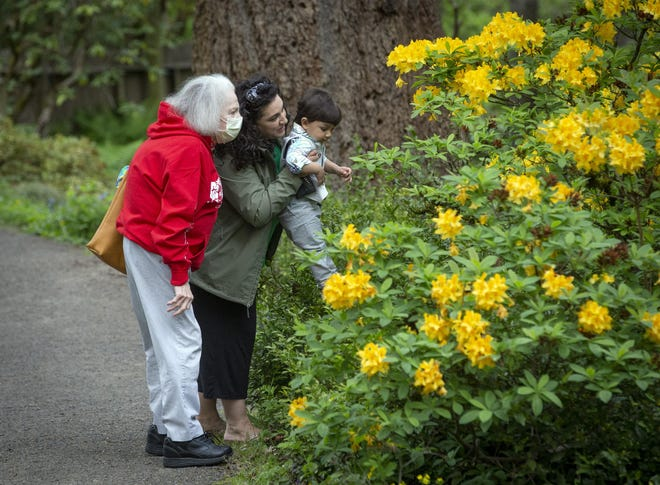 Alana Khastedai, left, looks at a rhododendron with her grandson, Viju Mareboni, and her daughter, Michele Mareboni, at Hendricks Park in 2020.