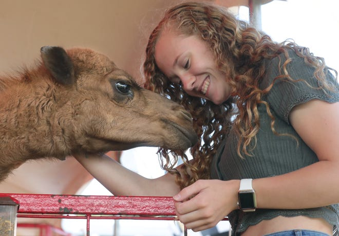 Rachel Evans of Ravenna snuggles with Bubbles the camel at the 2020 Summit County Fair. This year's fair kicks off July 27.