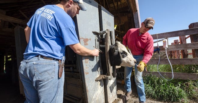 The Beef Quality Assurance program began as a campaign to educate beef producers about proper injection sites and drug withdrawals. It has since broadened to cover hot topics like livestock handling, animal welfare and resource management. Now cattle industry leaders are shifting it to become a consumer-facing promotional program as well.
