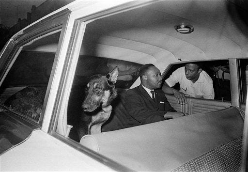Dr. Martin Luther King Jr. rides in the back seat of a police car with a police dog as he is returned to jail in St. Augustine after testifying before a grand jury investigating racial unrest in the city, June 12, 1964. Andrew Young is seen outside the car.
