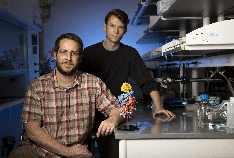 University of Texas Associate Professor Jason McLellan, left, with graduate student Daniel Wrapp next to a 3D model of the new coronavirus.