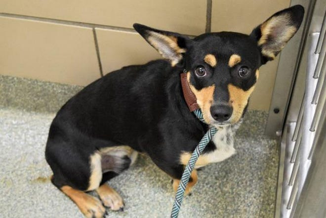 Lubbock Animal Services' animal shelter is always looking for members of the community to step up to adopt an animal in need of a home.