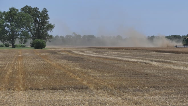 A wheat crop being harvested.
