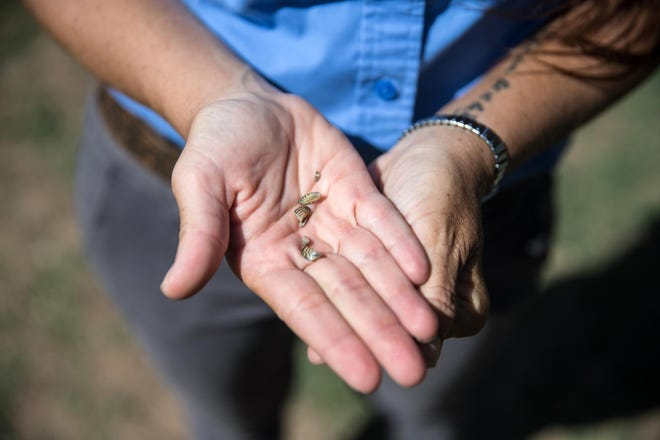 Zebra mussels are tiny but can cause serious problems in water systems.