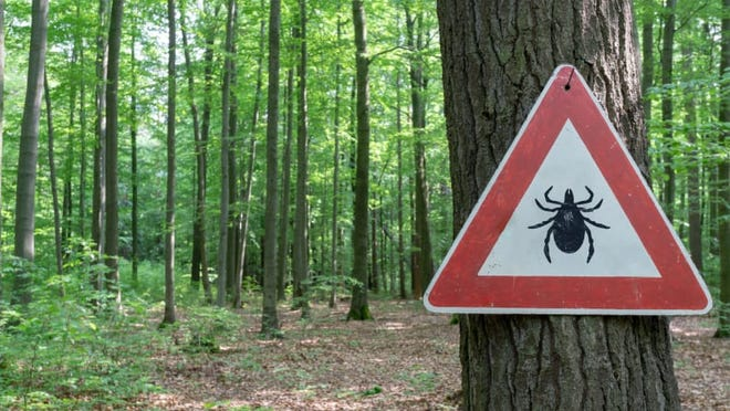 Different species of ticks spread different diseases--that's why it's important to know what ticks could be in your geographic area in the event you get bit.