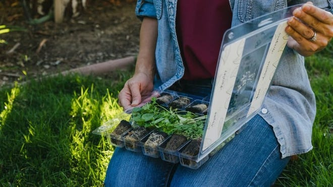 It's easy to grow your own garden with this unique subscription.