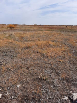 This is a drought-stressed pasture.