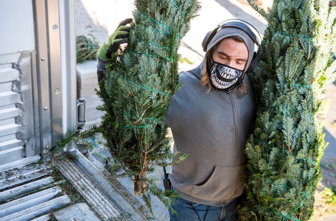 Avery Beltcher grabs a couple of the 800 trees to be sold at Mays Greenhouse on Thursday. (Rich Janzaruk / Herald-Times)