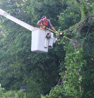 ABOVE: Spencer Street Department employee Richard Boll, up in a bucket truck lift, cuts a limb from a hanging over US 231 North / N. Fletcher Avenue, near James Drive. (Submitted / Spencer Evening World)