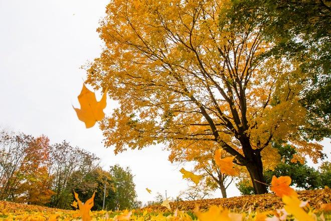 fallfoliage10142020_02a.jpg