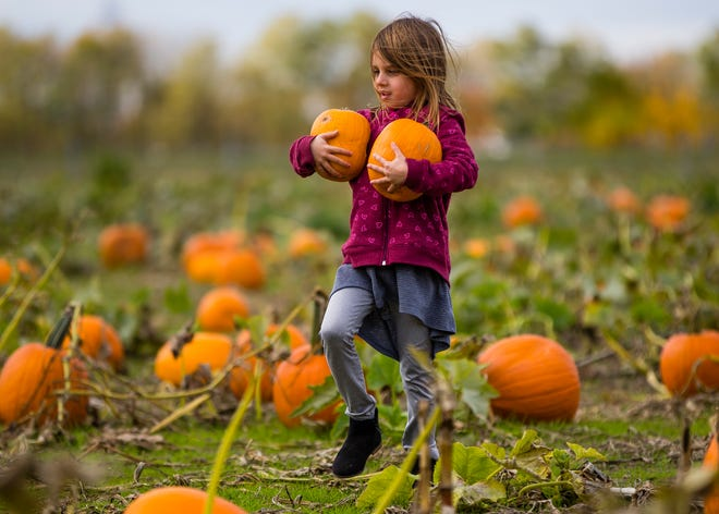 Ava Hewlett, 6, carries her pumpkins to the car Friday at Hilltop Farms in Mishawaka.