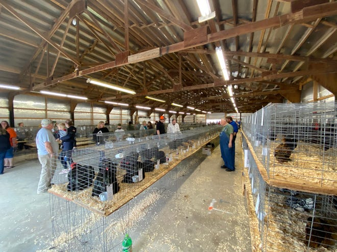"""The Spring poultry show at the Owen County fairgrounds was a big success this weekend, despite the rainy conditions. Families from all over the country """"flocked' to Spencer to participate in the largest poultry show the county has hosted. The event brought much to the local economy by way of hotel room stays, food and shopping. Beautiful birds were on display for all to view and enjoy. (Amanda York / Spencer Evening World)"""