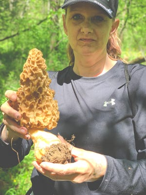 Local resident Veronica Immel came across a massive morel rmushroom recently in Owen County. The specimen was weighed at Cataract Lake Grocery & Deli and came in at at nearly half a pound. Congratulations on your great find Veronica! (Submitted / Spencer Evening World)