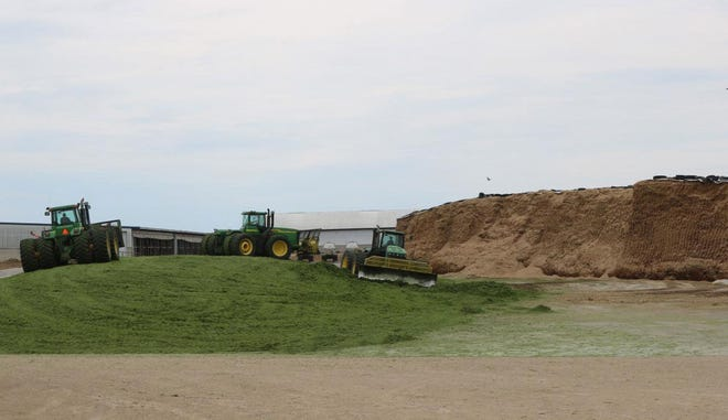 Packing is a very important part of putting up high-quality silage. Three tractors pack and push up a pile on a South Dakota dairy farm.