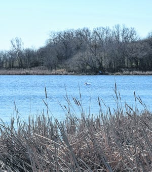 A lone pelican floats on the water at Oakwood Lakes State Park near Bruce on Easter Sunday.