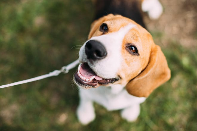 Bring your best doggie friend to North Water Brewing Co. in Kent for Yappy Hour on June 15. The event benefits the Portage Park District.