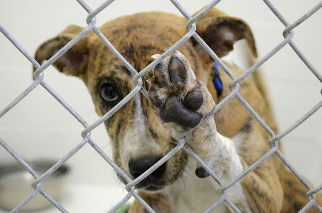 The annual Blessing of the Animals is scheduled to take place at 10 a.m. on Oct. 2at the Otsego County Animal Shelter.