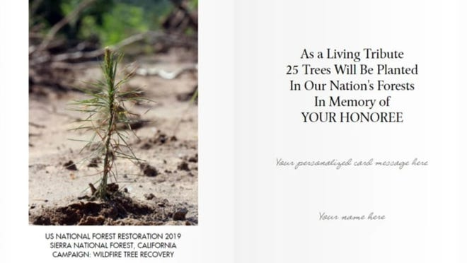 Plant a forest to honor the legacy of a child.