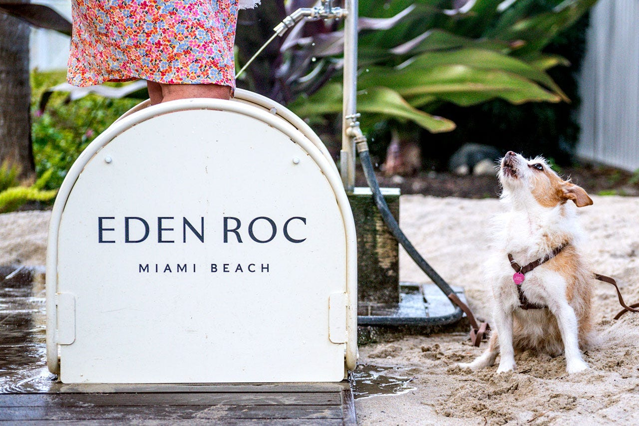 These are some of the best pet-friendly hotels and resorts in Florida