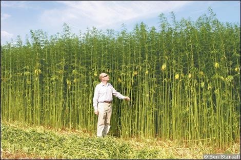Current producers of industrialhemphave tobe approved through the Alabama Department of Agriculture and Industry.Productionis strictly regulated to ensure that industrial hemp is grown for industrial purposes.