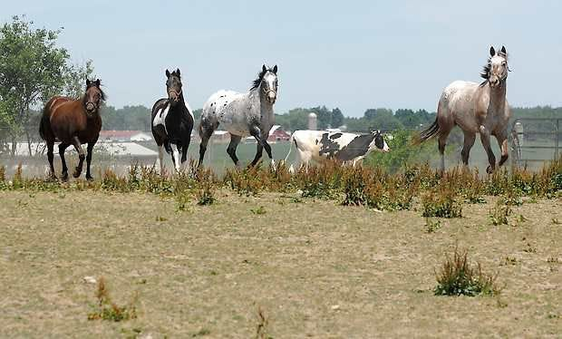 Recent dry weather has raised several questions about how to manage horse pastures during drought.