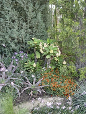 Some succulents do grow well in the hot summers and cold winters in Shasta County. They are fire resistant and require less water than most other plants.