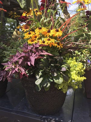 Use perennials in your fall garden containers.