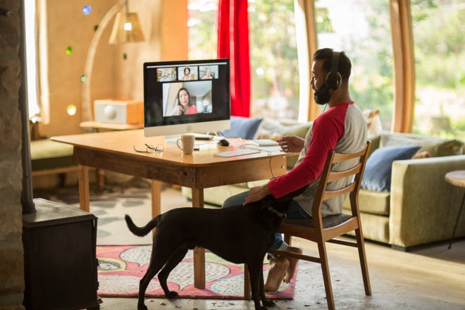 A person working from home, seated at their computer, while petting their dog.
