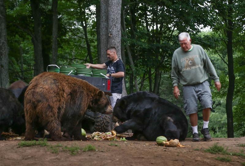 free amateur dl black bear young thug hm