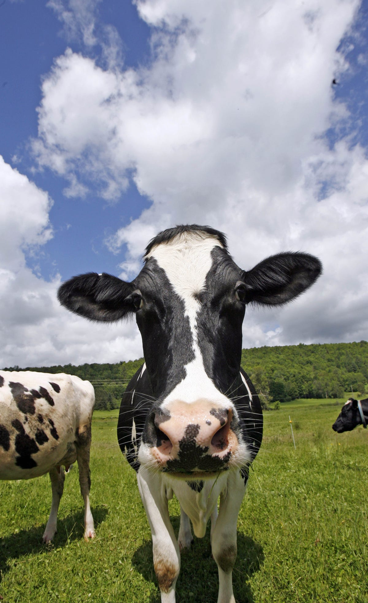 Woman ticketed for sending cow poop to neighbor
