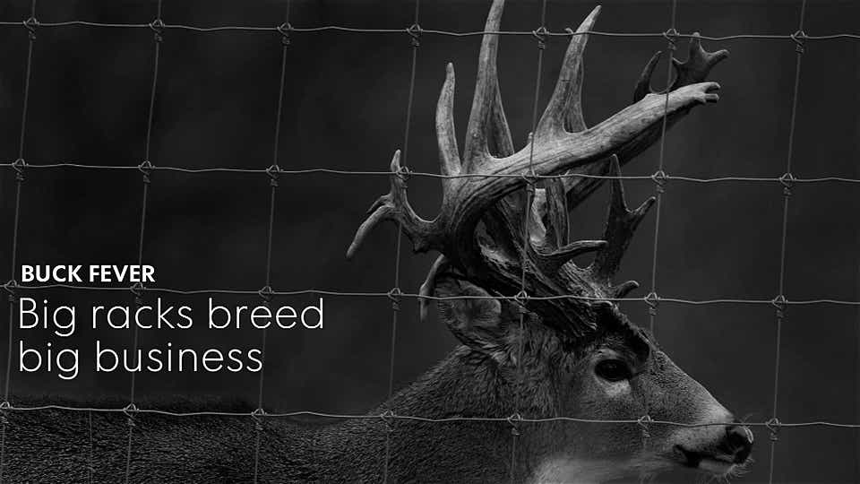 Buck Fever: Big racks breed big business
