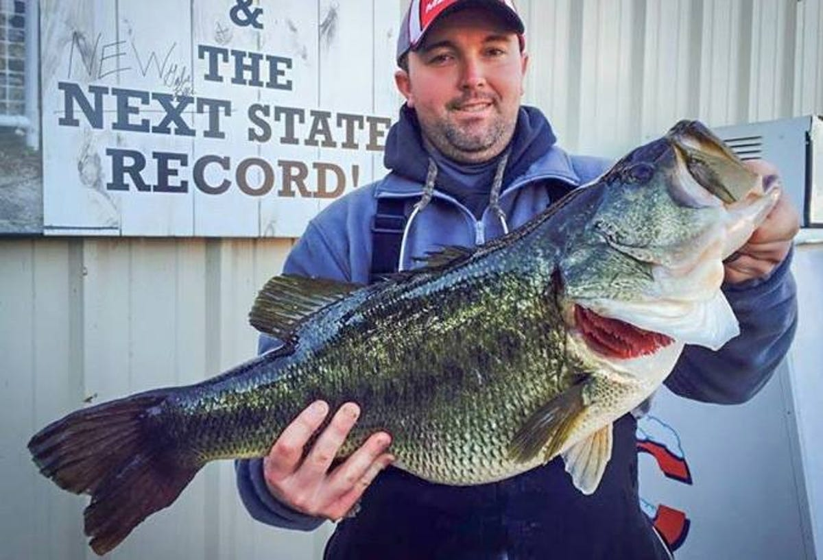 TWRA: Largemouth bass record probably won't last long