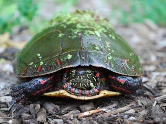 turtlee.jpg