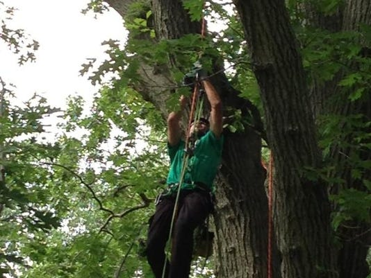 Treeclimbactionn.jpg