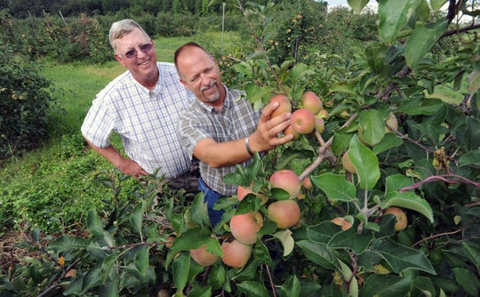 Charles Smith, left, and his brother, Matt, from T.S. Smith & Sons pick apples from their Bridgeville farm in this file photo.