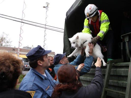 sandy-dog-rescue