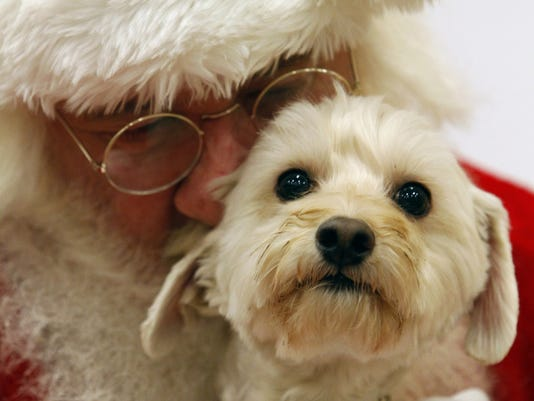 holiday gifts for pets following high tech trend