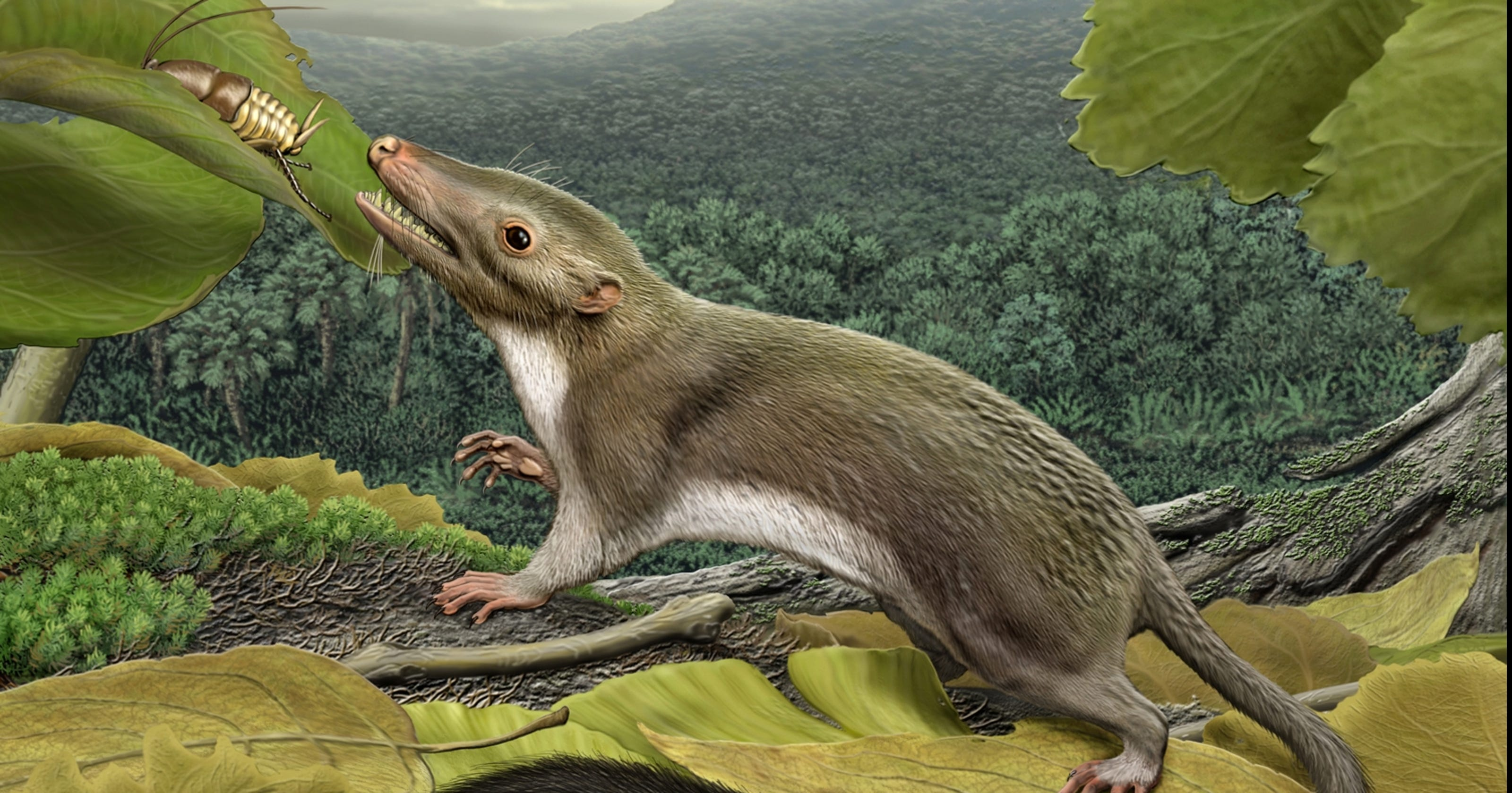 Mammal ancestry expanded after dinosaurs died off