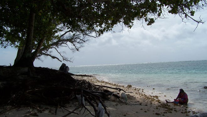 A woman gathers shellfish on April 25, 2007, on an eroded beach on Majuro Atoll in the Marshall Islands. Residents say trees are falling into the ocean as the beaches recede with rising Pacific Ocean waters.