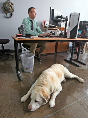 Bob Baird works long hours in a demanding job leading a small team of Web developers. But he's still smiling, partly due to an unusual office perk: He can bring his yellow lab, Hoagey, to work with him.