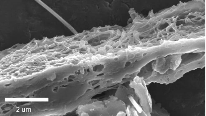 A magnified image of a carbon nanofiber penetrating tissue.