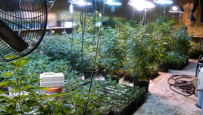 Authorities seized marijuana and growing equipment  from inside a Queens, N.Y. warehouse allegedly operated by Andrea Sanderlin, a Scarsdale, N.Y. mother of two. She pleaded not guilty June 28, 2013 to federal charges that could land her in jail for up to 10 years.