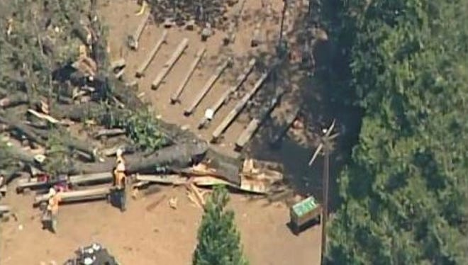 A tree fell at a summer camp near Yosemite National Park Wednesday, injuring 20 people, officials said.