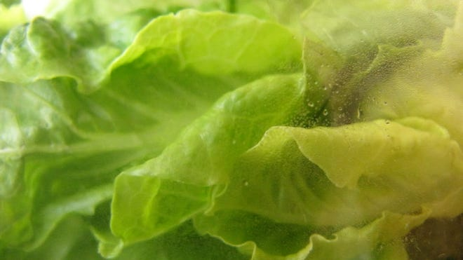 A prepackaged lettuce mix.