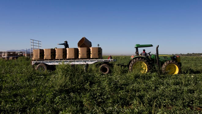 Many farmers are hoping that the Senate's immigration bill will pass because they would have more assurance of a steady supply of workers to harvest crops.