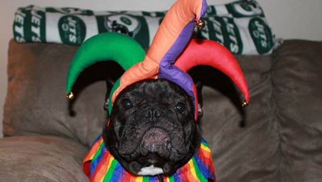 Interact with your customers on social media during the entire season from Halloween to New Year's to keep them coming back after the holidays. Dogtopia started its Howl-o-ween Costume Contest five years ago.