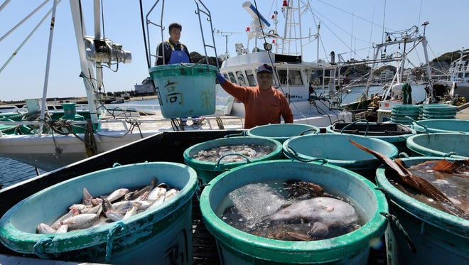Three weeks after the March 11, 2001, earthquake and tsunami crippled the Fukushima Dai-ichi nuclear power plant, Japanese fishermen unloaded their catch at the nearby Hirakata fish market in Kitaibaraki, Ibaraki prefecture. Today, fish and seafood caught off the coast of the plant show  radioactive cesium continues from either reactor leaks or seabed sediment.