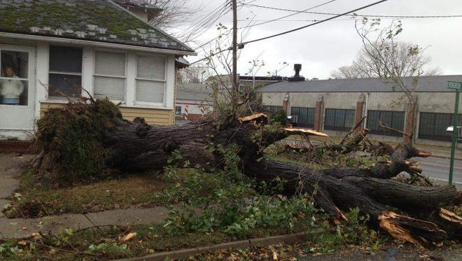 A thick tree in resident Olga Kern's front yard was knocked down by Hurricane Sandy's heavy winds Monday afternoon in Neptune City, N.J.